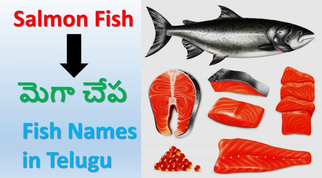 Salmon fish telugu